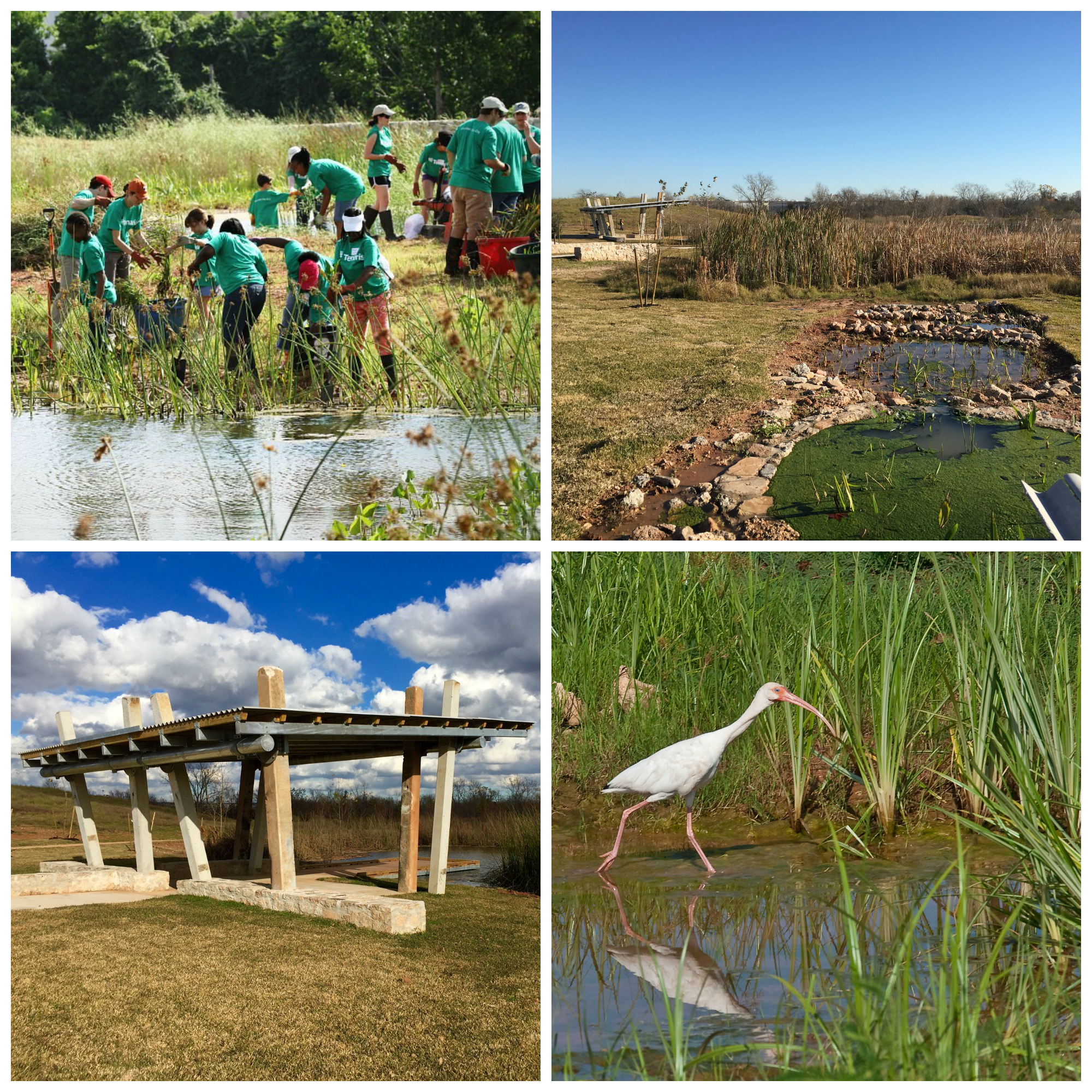 BBNP Collage 2